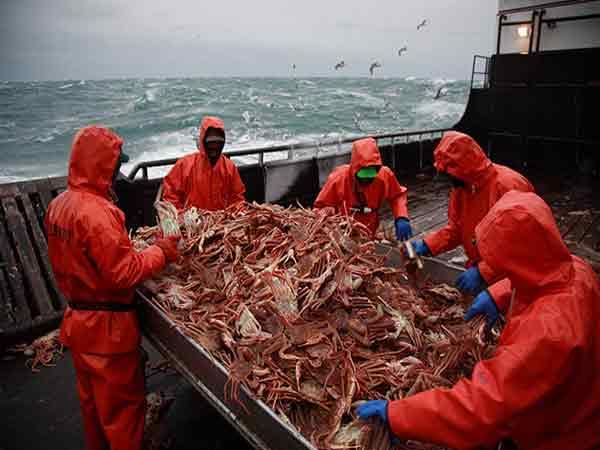 На Камчатке капитан иностранного судна ответит за перевозку живых крабов