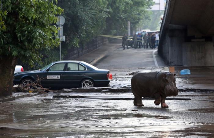 Жертвами наводнения в Тбилиси стали более 300 обитателей зоопарка