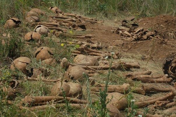 Останки свыше 100 советских воинов найдены поисковиками под Ростовом