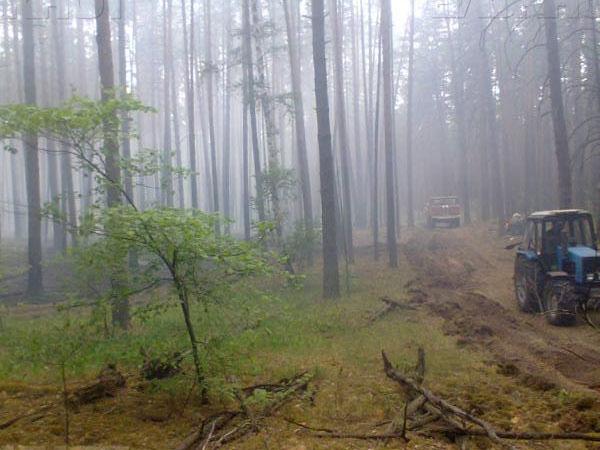 МЧС: пожар в Воронежском заповеднике мог произойти из-за поджога