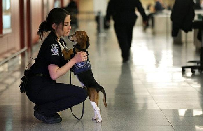 Сотрудник Секретной службы с собакой.