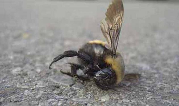 Гибель пчел.