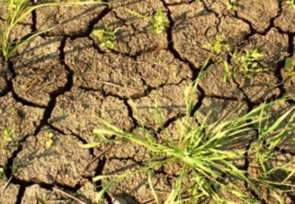 Засуха, реанимобили и беспредел в детсаду: Калмыкия 22 июля
