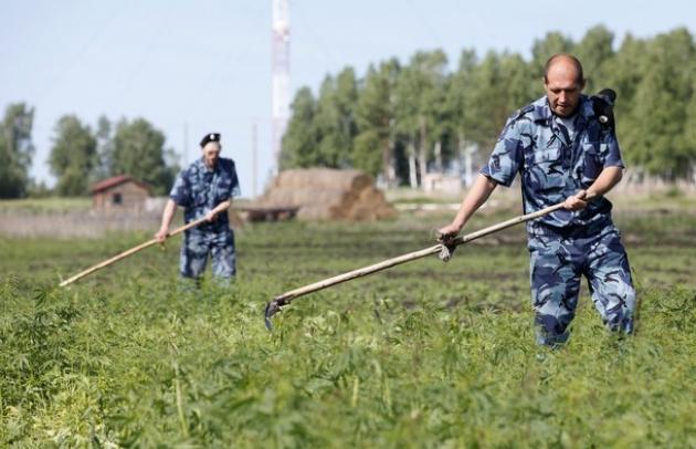 На борьбу с наркоманией в Брянской области потратят 65 млн рублей