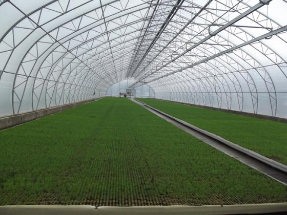 В Карачаево-Черкесии откроют центр разведения кукурузы