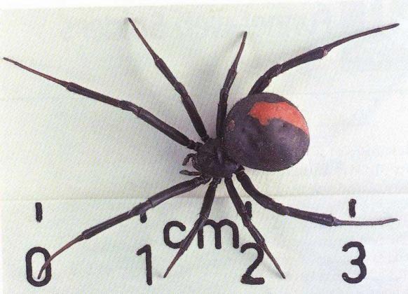В Курганской области завелись пауки-каракуты