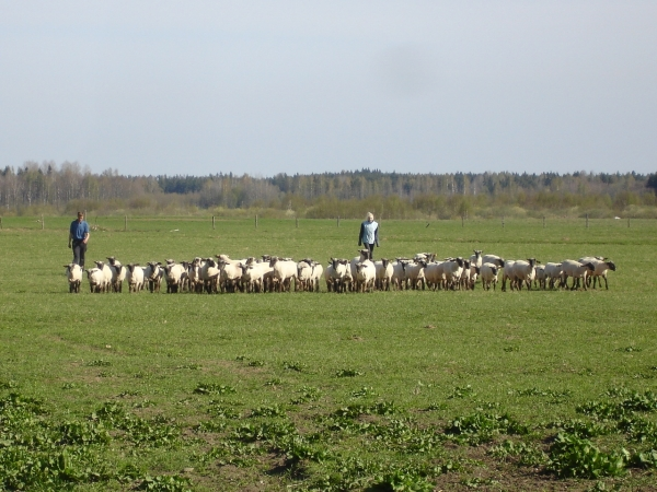 Латвия сельское хозяйство.