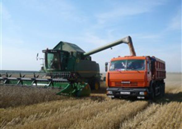 Калужские аграрии приступили к уборке зерновых.