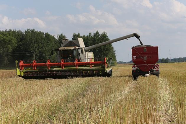 В Калининградской области началась уборка культуры, идущей на экспорт в ЕС