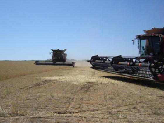В закрома Волгоградской области собрано 1,3 млн тонн зерна