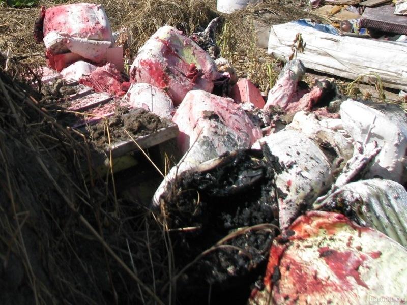 ООО «Сервис экологической безопасности» организовало несанкционированную свалку токсичных отходов в Барануле