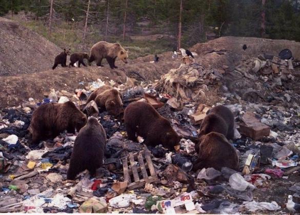 Медведи на свалке в Якутии.