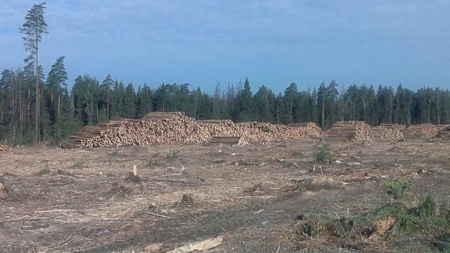 Комлесхоз Подмосковья: На землях лесного фонда ничего не строят