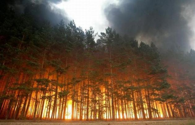 24 региона РФ получили на август «красный» уровень пожароопасности в лесах