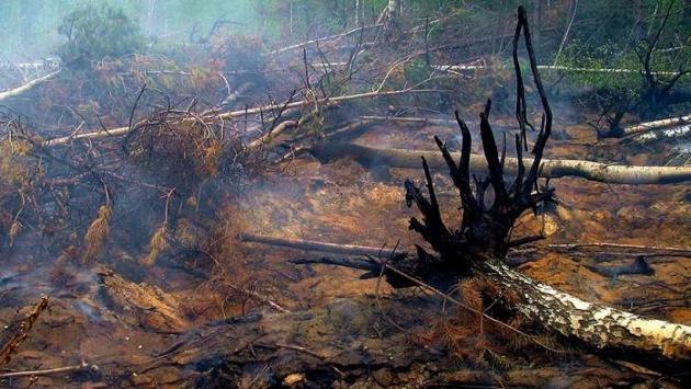 Торфяной пожар под Архангельском.