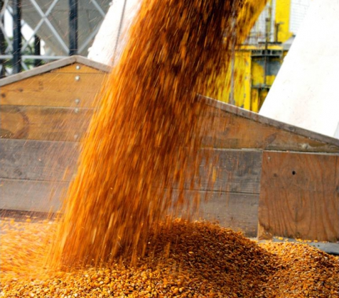 Глава Ставрополья предлагает повысить предел стоимости зерна для пошлины