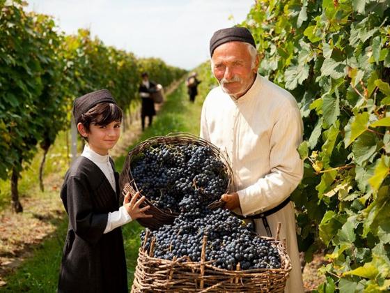 Сбор винограда в Грузии.