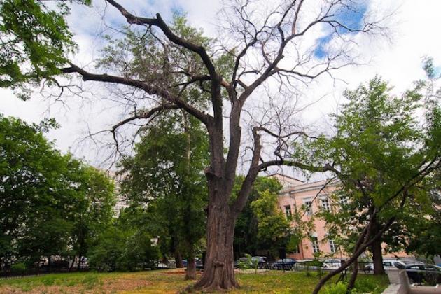 «Голландская болезнь» губит деревья в Латвии