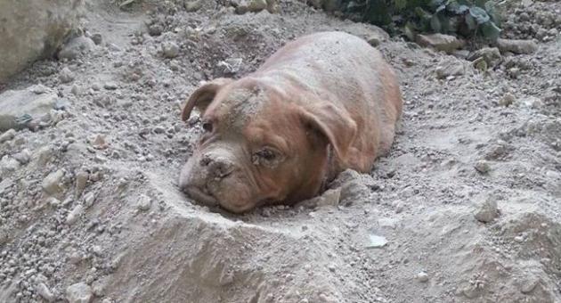 Житель Франции спас собаку, похороненную заживо