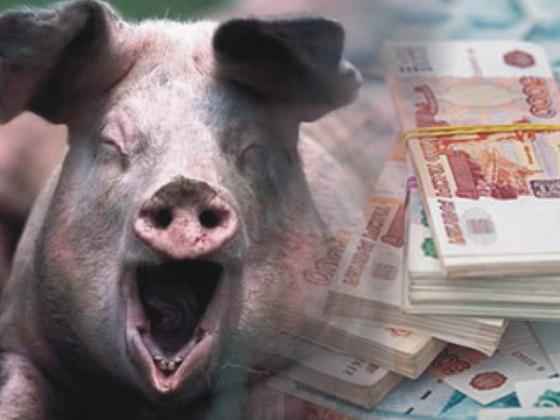 Гранты на строительство свиноферм выдали фиктивным нижегородским компаниям