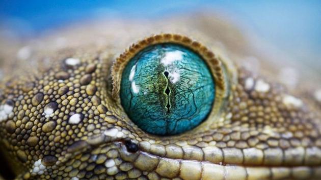 В мире рептилий.