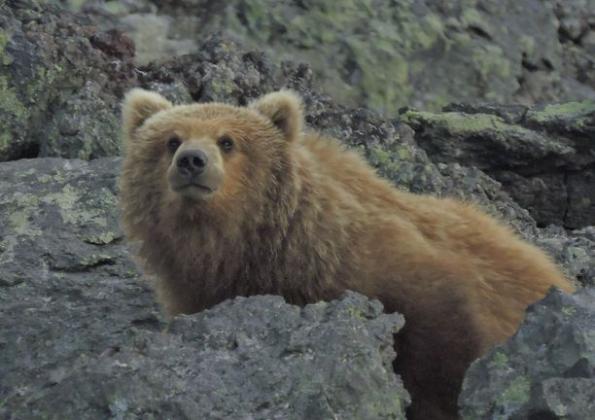 Фото Евгения Карпова, предоставлено природным парком «Вулканы Камчатки»