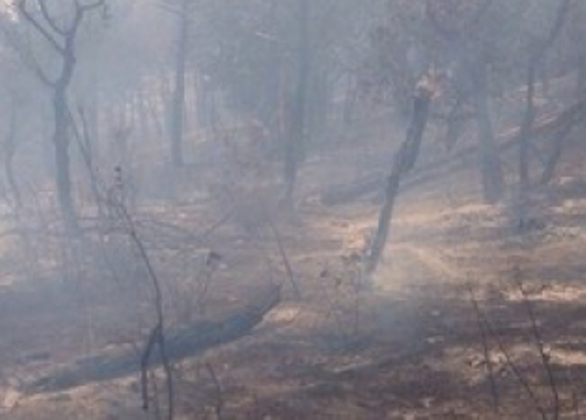 Под Геленджиком горит лес фото: 23.mvd.ru