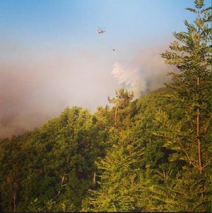Под Геленджиком потушен лесной пожар фото: mchs.gov.ru