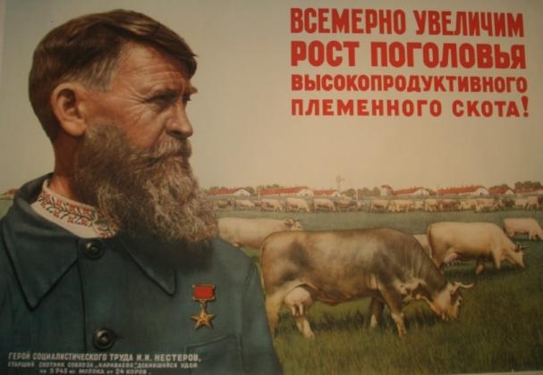 Б. Березовский. «Всемерно увеличим рост поголовья высокопродуктивного племенного скота!» Плакат. 1950 год
