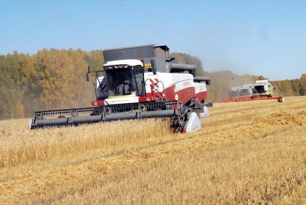 Власти Новосибирской области снизили прогноз урожайности зерновых