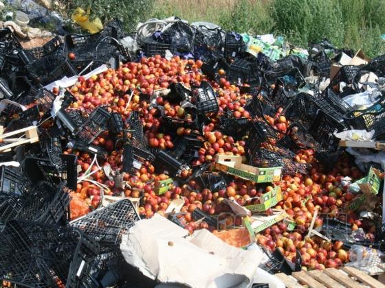 Под Воронежем уничтожили санкционные нектарины и персики