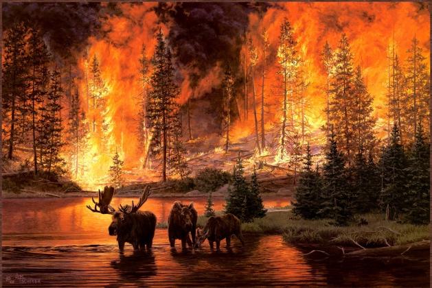 Лоси спасаются от лесного пожара.