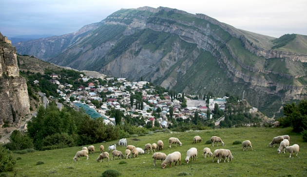 В Дагестане ситуацию с личными хозяйствами надо ввести в правовые рамки