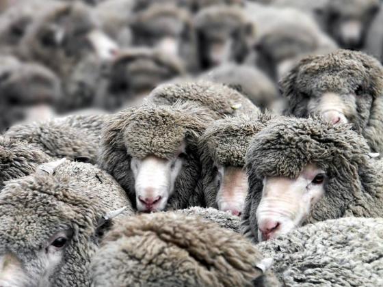 Медведев прервал «вздорные дискуссии» об ограничении поголовья скота