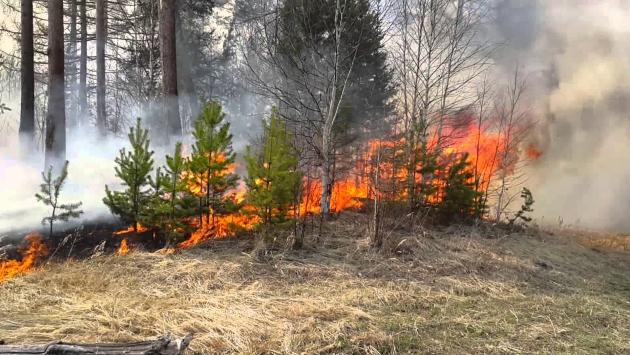Возгорание в лесу: кадр youtube.com