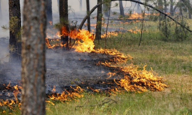 8 лесных пожаров произошло в Калужской области с начала сезона