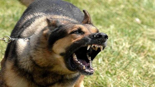 В Югре судят хозяина собак, загрызших ребенка