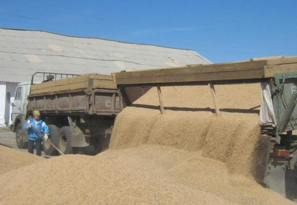 Минсельхоз России планирует закупить до 2 млн тонн зерна