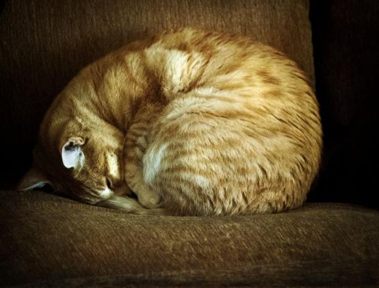 Кошка свернулась клубком.