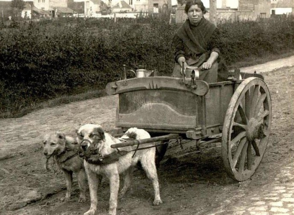 Традиционная собачья упряжка в Западной Европе