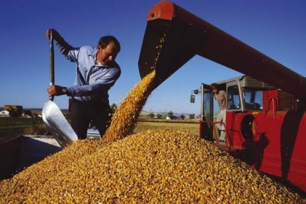 Минсельхоз: Россия получит 100 млн тонн зерна
