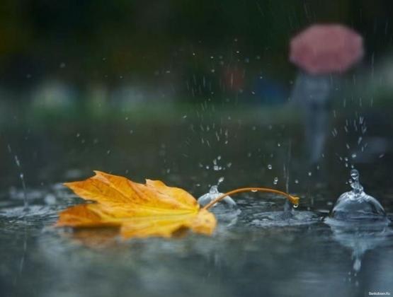 Осенний лист.
