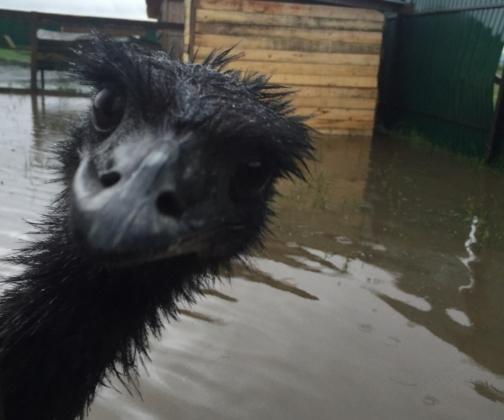 Затопление зоопарка в Уссурийске