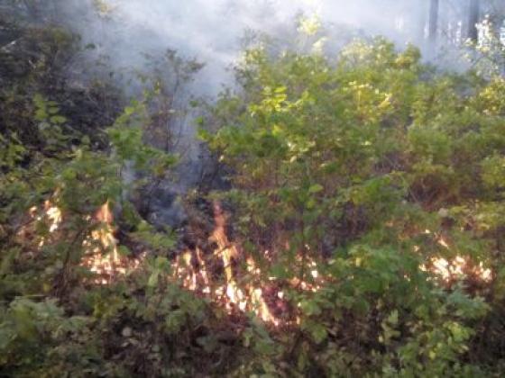 Пожар в заповеднике «Столбы». Фото: zapovednik-stolby.ru