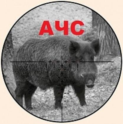 В Волгоградской области выявлен очаг чумы свиней