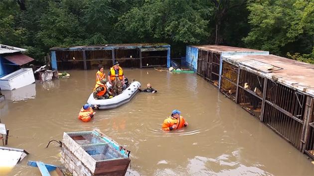 Эвакуация животных из подтопленного зоопарка.