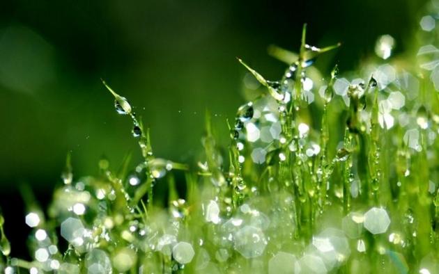 Утверждены критерии определения объектов, подлежащих экологическому надзору