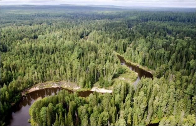 Ученые подсчитали число деревьев на планете