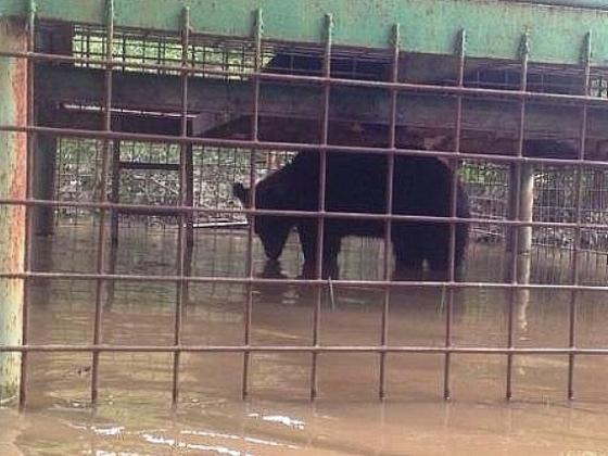 В Уссурийске из зоопарка эвакуировали последних 3 медведей