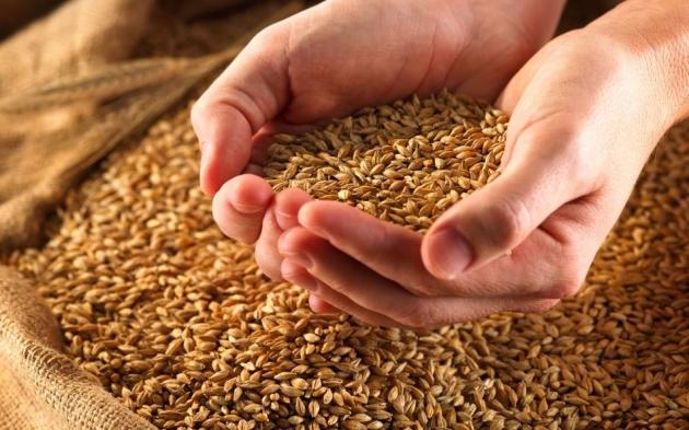 В ЛНР рапс и подсолнечник заменяют зерновыми  культурами